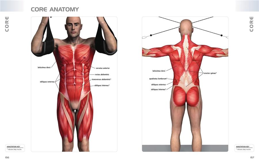 Anatomy Of Exercise: A Trainer\'s Inside Guide to Your Workout   Pure ...